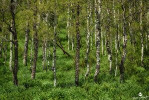 Green Meadows and Aspens HDR by mjohanson