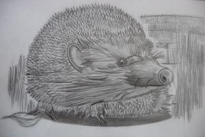 Igel - hedgehog by theTobs