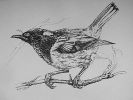 Stitchbird, B-W version by Concini