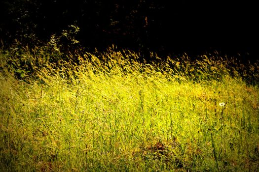 Mountain Meadow Grass by designerfied