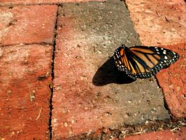 Butterfly on Brick 2 by siete111