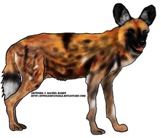 April: African Wild Dog by 8TwilightAngel8