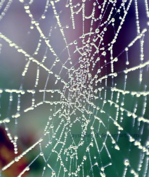 .....:::Spiders Web:::..... by JAYSMILES23