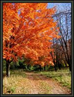 Fall Colors by midgard