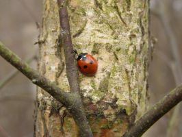 Ladybird... by chop-stock