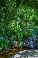 Green Oasis by Aenea-Jones
