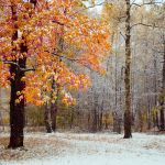 First Snow 8058650 by StockProject1