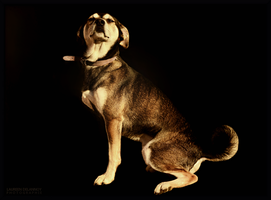 Dog Model by WinonaPhotographie