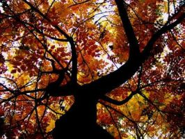 autumnal tree by CalvuS