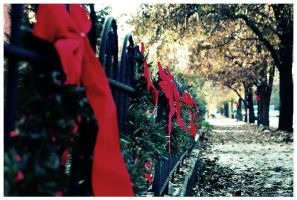 Garland on 2nd Street by moonjuice