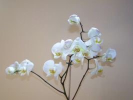 Orchid 1 by ShutterBugs-Stock