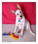 Gimli at 13 weeks by little-faerie-bits