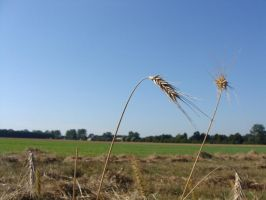 after harvest? by miracoloso