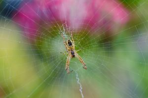 spider in its web by halfhandau