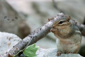 Alvin or one of the other ones? by Pandinus
