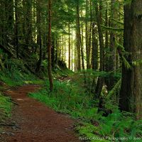 Boulder River Trail by La-Vita-a-Bella