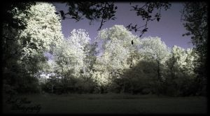 infrared late afternoon by GothicAmethyst