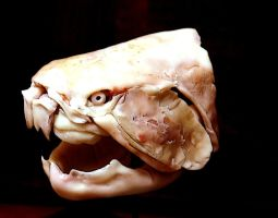 Dunkleosteus step2 by hannay1982