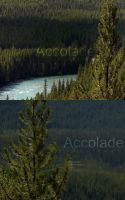 Accolade - CD Covers by Pokehkins