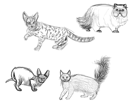 Cat breed practice by Turtledragon2001