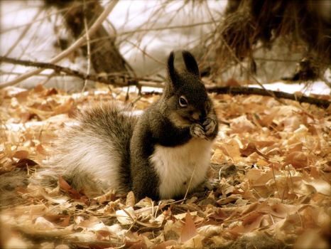 Bunny Squirrel---2 by Rosefish