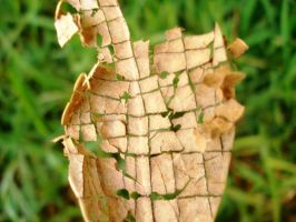 it used to be a green leaf by brmn