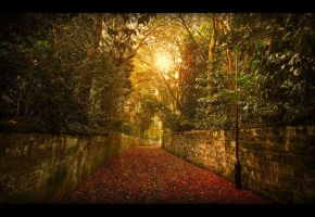 The Path To Autumn by sneakazz