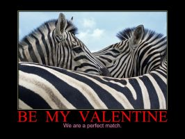 Matching Zebra by MichelLalonde