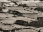 Fields and Hedges by Dellboyy