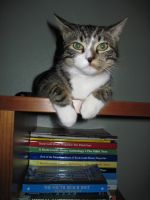 Cat on Bookshelf by Karenee-Art-Stock