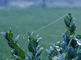 morning web by pollybee