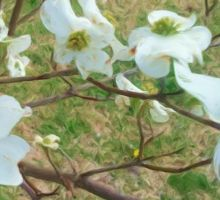 Dogwood by octaputer