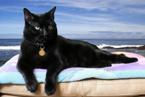 Black Cat 2 by photoboater