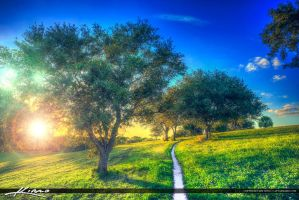 Walking-Path-on-Grassy-Hill-with-Oak-Trees by CaptainKimo