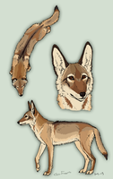 Coyote Design by Canis-ferox