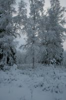Snowy Trees 5 by Arctic-Stock