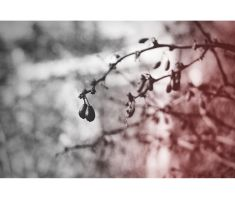 Spring is comming I by lotos15