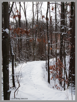 Snowy Path with Fox Tracks by Mogrianne