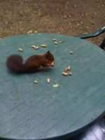 Squirrel eating on our table. by MBijen