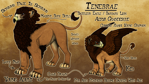 Tenebrae : Reference Sheet by Blue-Lizard