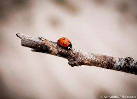 Ladybug by kitty974