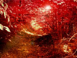 Autumn Fire by Morna