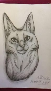 2017 New Kitty Design by PortalAction