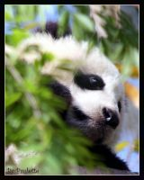 Baby Zhen Zhen Up A Tree by shutterbugmom