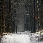 Winter Forest by Justine1985
