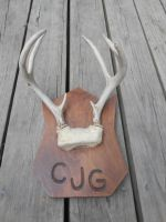 7 Point Mounted Antlers (For Sale) by Saceronsage