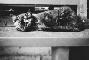 Only CAT by Summer-Evenings