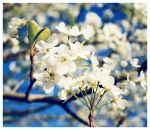 .bloom by greenleaf-imagery
