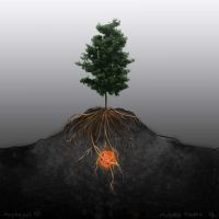 The seed by ivey