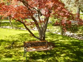 Bench and Tree by Lady-Tima
